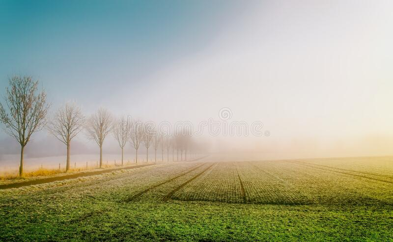 Field of crops at sunrise royalty free stock image