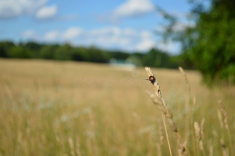The Field d'espoir photo libre de droits