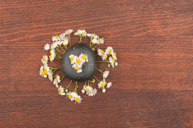 Field daisies and black stone stylized under the sun and rays stock photos