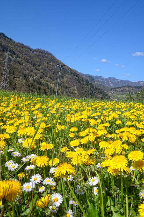 Download Field of daisies stock photo. Image of cloud, landscape - 36699134