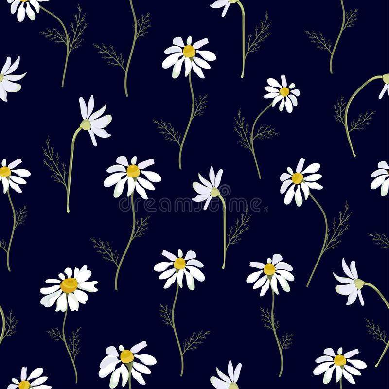 Field daisies seamless pattern on dark background. Vector vector illustration