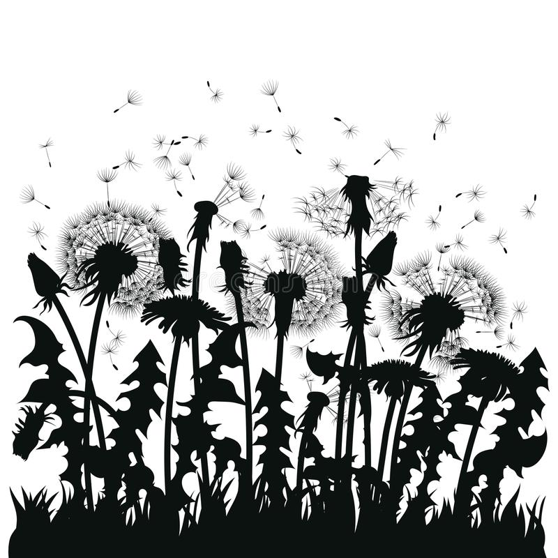 Field of dandelion flowers. Black silhouettes of summer plants on a white background. The outline of a glade with stock illustration