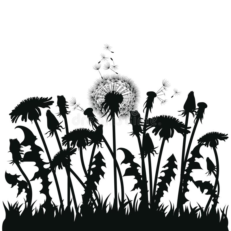 Download Field Of Dandelion Flowers Black Silhouettes Summer Plants On A White Background