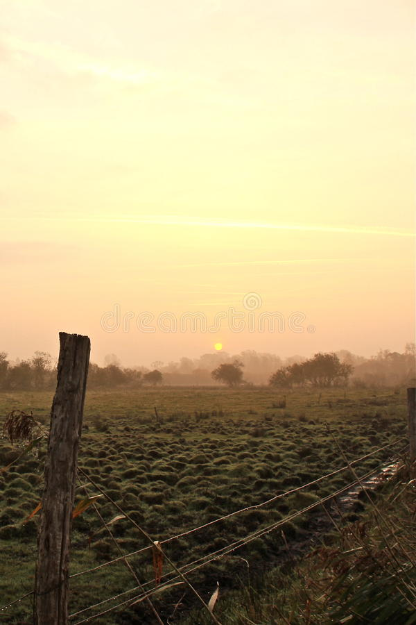 Download Field in the dawn stock image. Image of field, nature - 27495039
