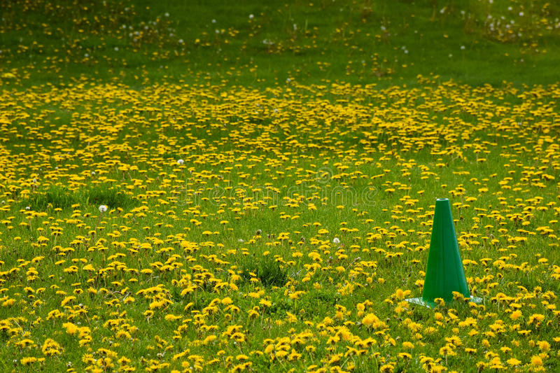 Field Day Playing Field Green Cone royalty free stock photo