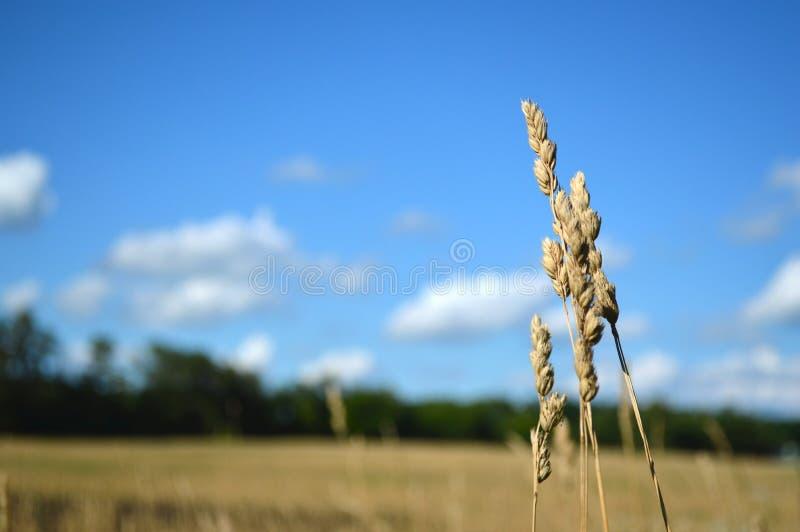 The Field der Hoffnung lizenzfreie stockfotografie