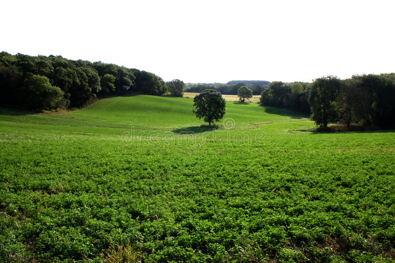 Field of Dreams stock images