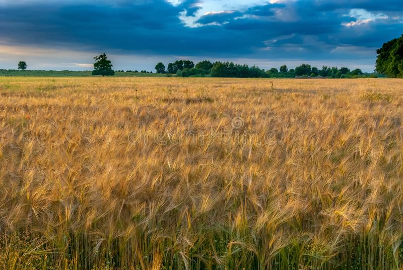 Field, Ecosystem, Crop, Grassland Free Public Domain Cc0 Image