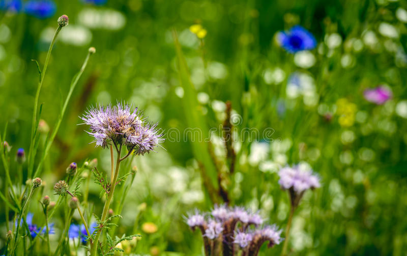 Field edge to support the conservation of biodiversity stock photography