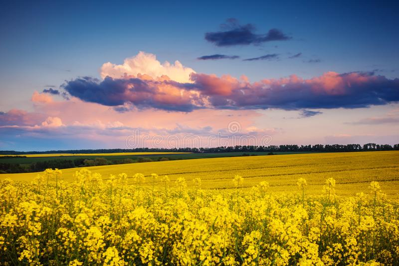 Field. Fantastic field at the dramatic overcast sky. Dark ominous clouds. Ukraine, Europe. Beauty world royalty free stock photos