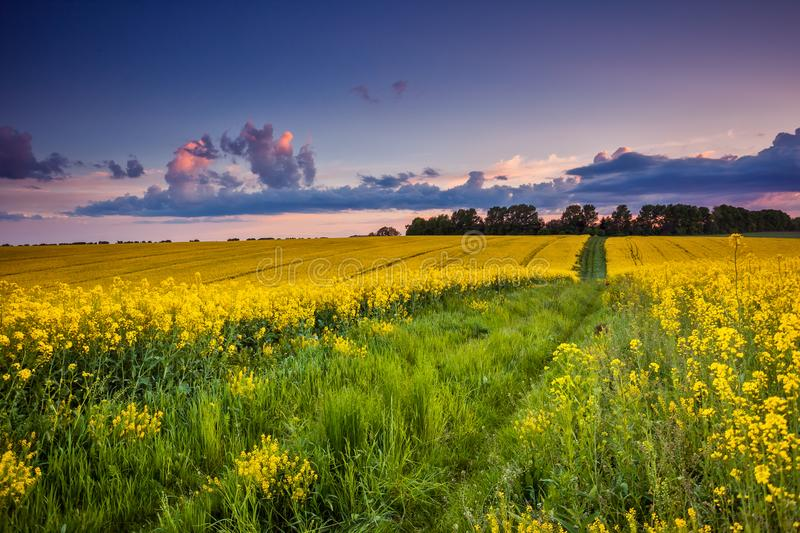 Field. Fantastic field at the dramatic overcast sky. Dark ominous clouds. Ukraine, Europe. Beauty world stock photo