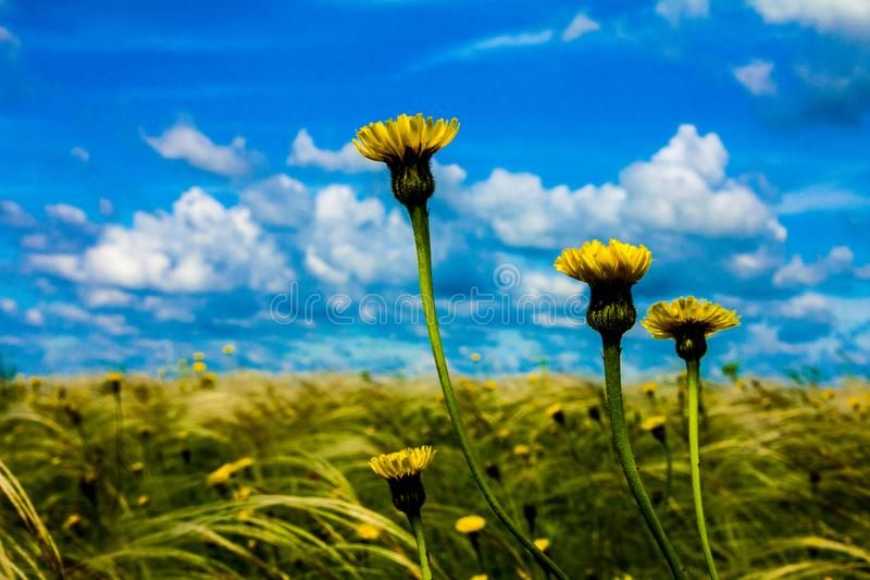 Field with feather grass royalty free stock photos