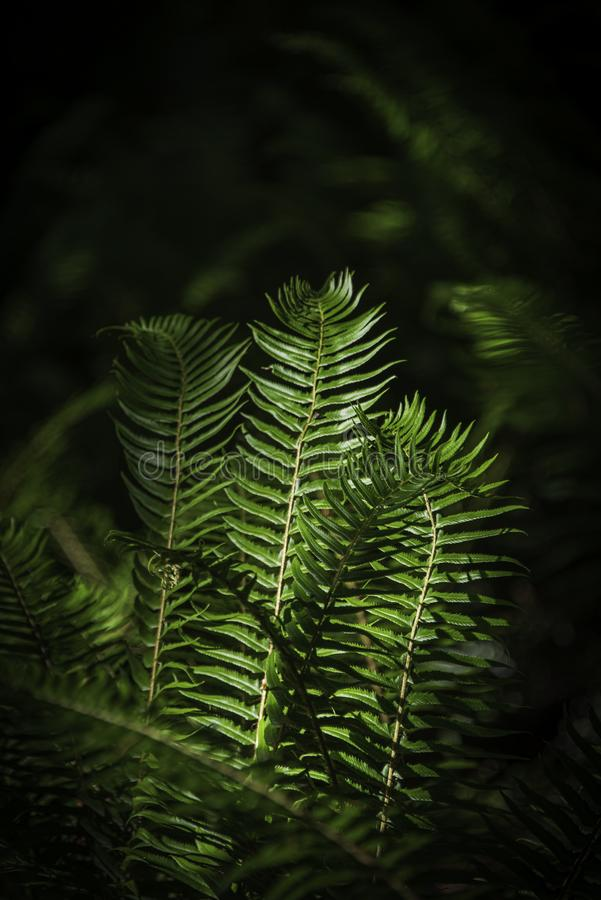 In A Field Of Ferns royalty free stock photography