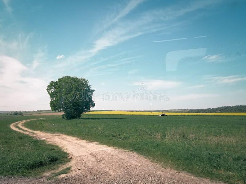 Fields in the western region of Ukraine royalty free stock image