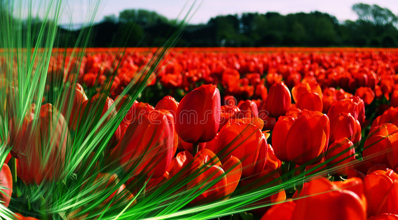 Field filled with passion stock photography