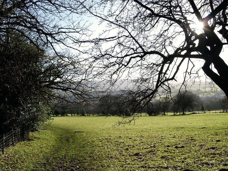 Field filled with trees in the Yorkshire dales royalty free stock photos