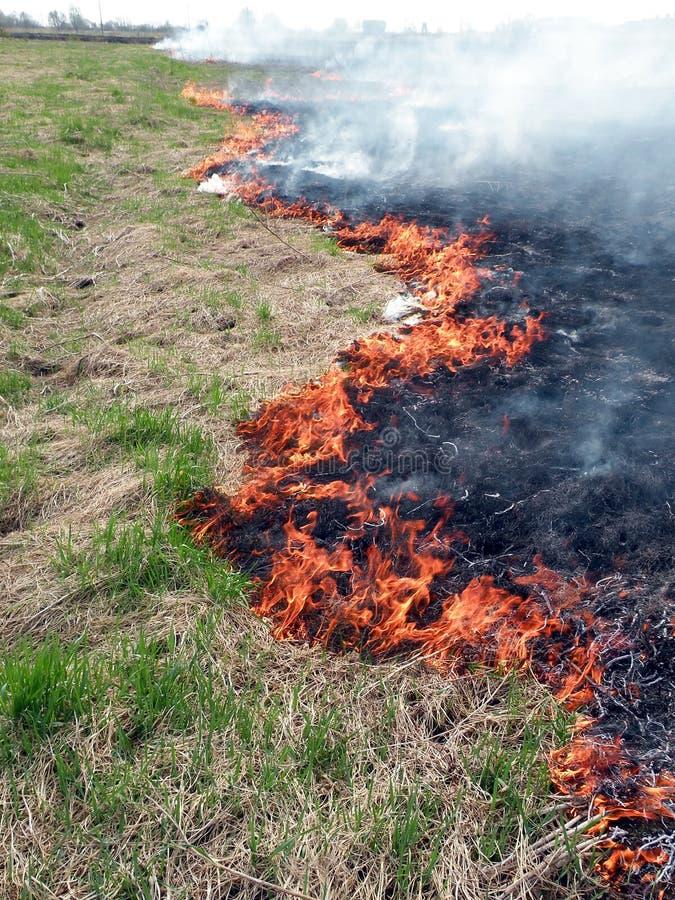 Download Field flame stock photo. Image of season, stalk, danger - 19288946