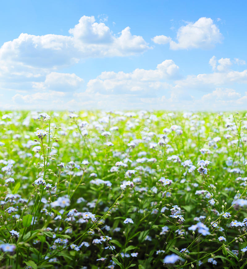 Download Field of flowers stock photo. Image of plant, spring - 16178740