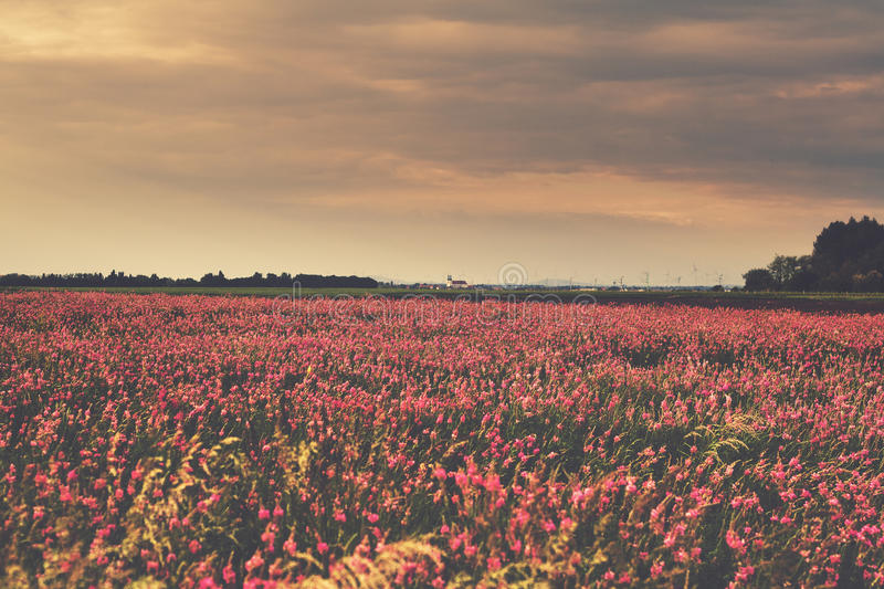 Field of flowers stock photos