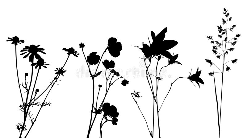 Field Flowers, Herbs And Plants, Vector, Traced Stock Photo