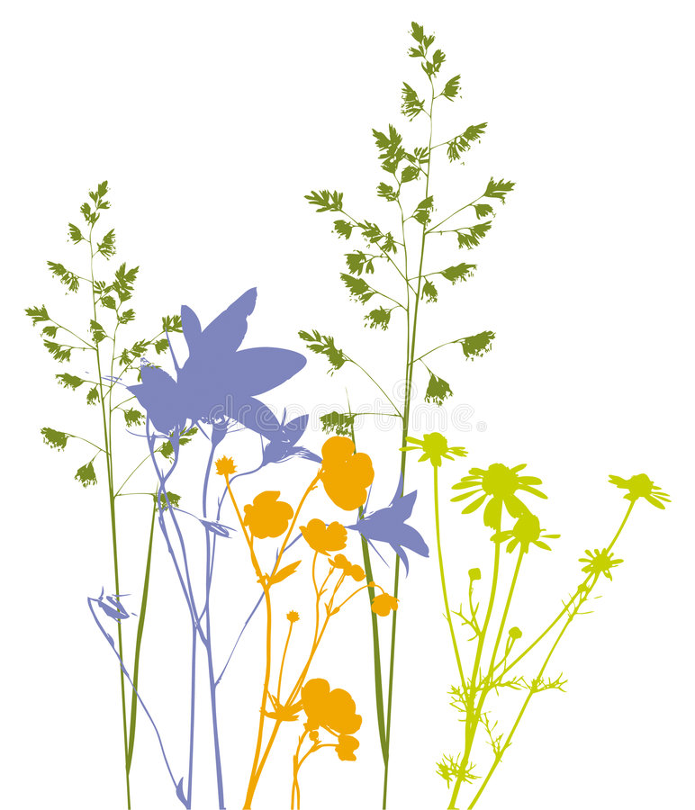 Field flowers, herbs and plants, vector, traced stock illustration