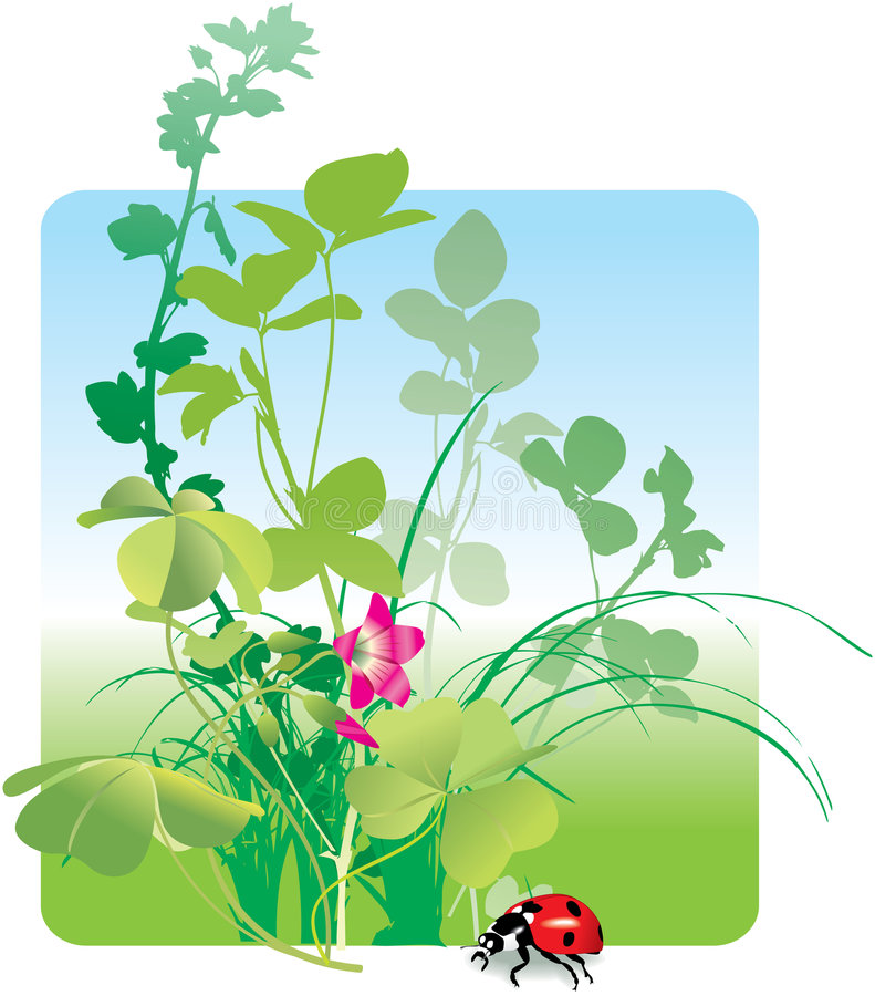 Field flowers and ladybird, spring vector illustration