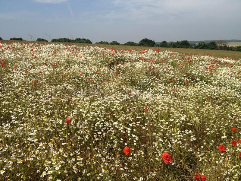 Field of Flowers stock photography