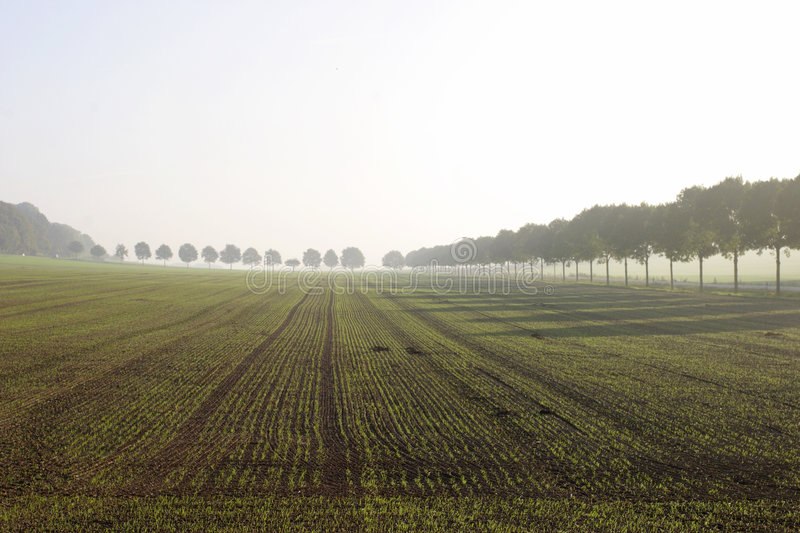 Field in fog. stock images