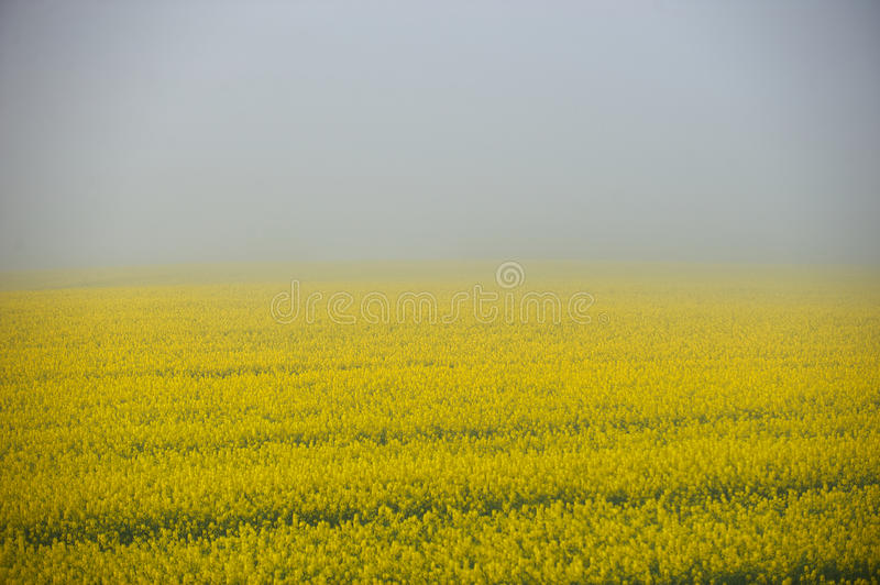 Field of Fog royalty free stock image