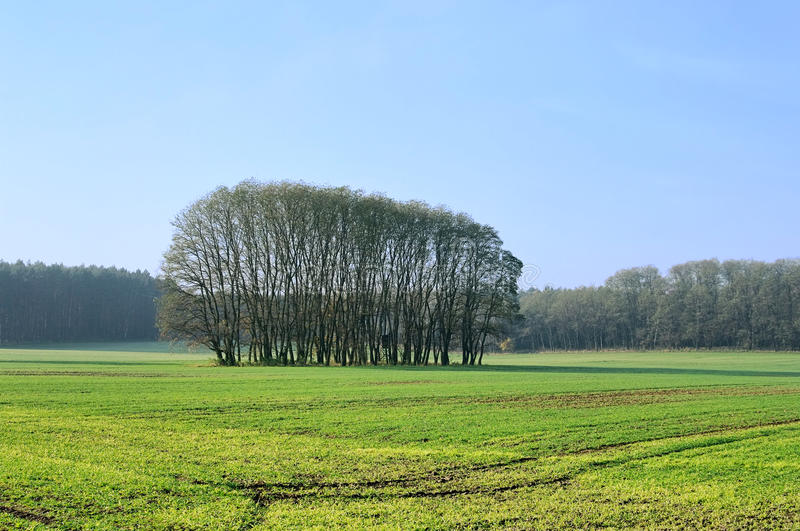 Field And Forest Royalty Free Stock Images