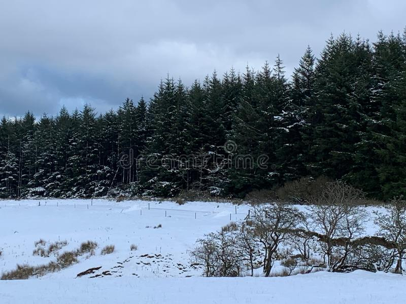Field and forest covered in snow royalty free stock photo