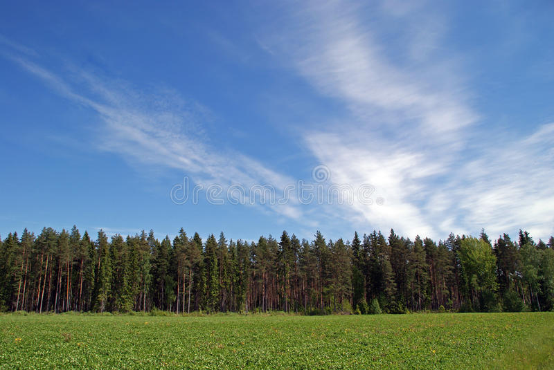 Field, Forest and Sky Landscape stock images