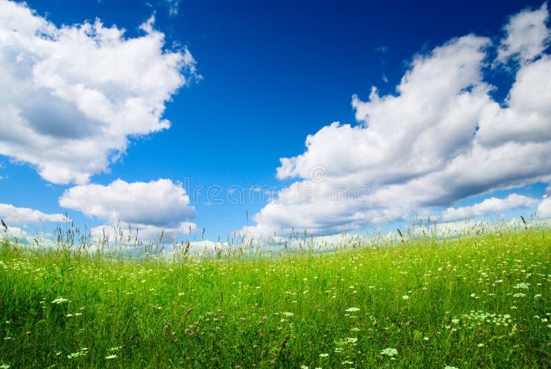 Field of fresh summer grass stock photo
