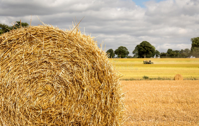 Field with freshly bales of hay royalty free stock photos