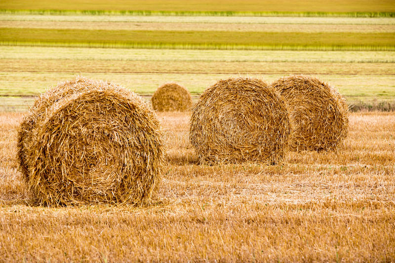 Field with freshly bales of hay stock images