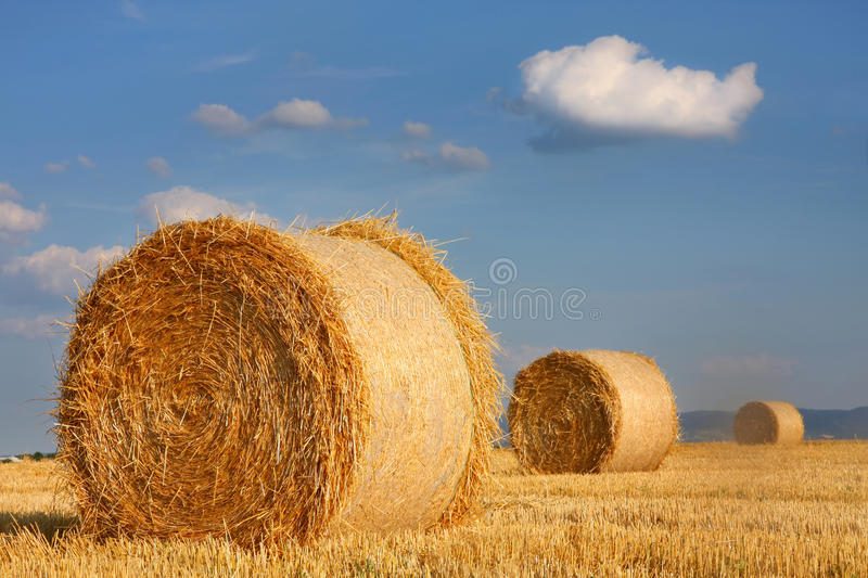 Field of freshly cut bales stock image