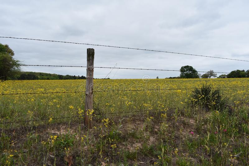 Field full of Yellow Flowers in East Texas. This was taken in East Texas, I was driving and looking for flowers. FYI Dog wood trees are all around Lake Lydia in stock image