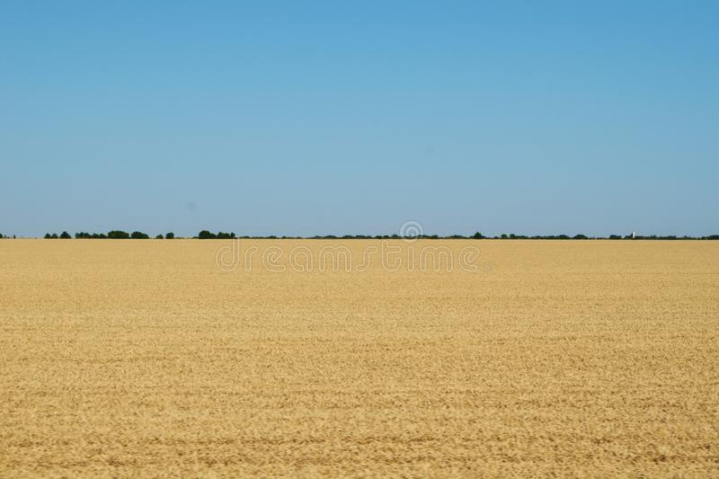 A field full of yellow wheat. A blue sky and a green forest in the distance royalty free stock photo