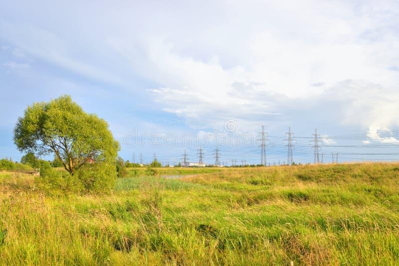 field grässommaren fotografering för bildbyråer