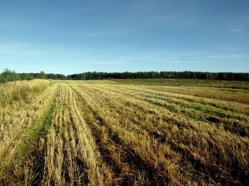 Field of Grain stock image