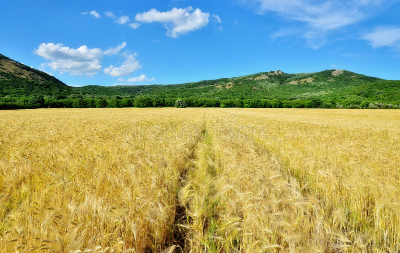 Download Field of grain stock image. Image of colorful, color - 33104593