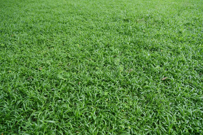 Field of grass background. royalty free stock photos