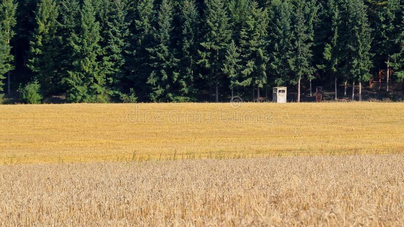 Field, Grass Family, Crop, Agriculture Free Public Domain Cc0 Image
