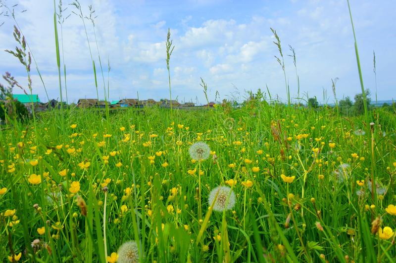 Field with grass, flowers, dandelions, village, summer stock photography