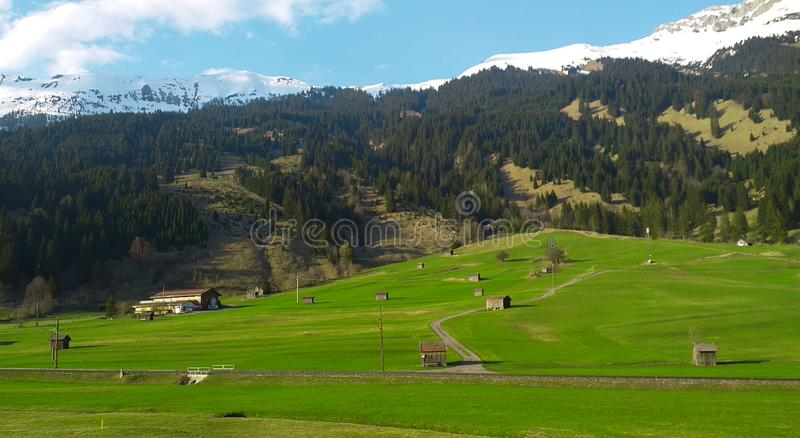 Field of grass and forest - snow covered mountains - Bavarian countryside. Europa stock images