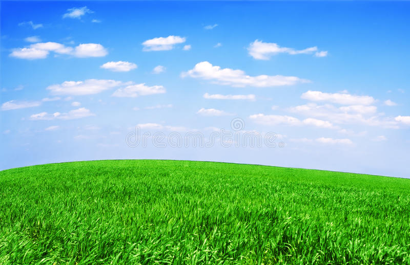 Download Field Of Grass And Perfect Sky Stock Photo - Image: 36603176