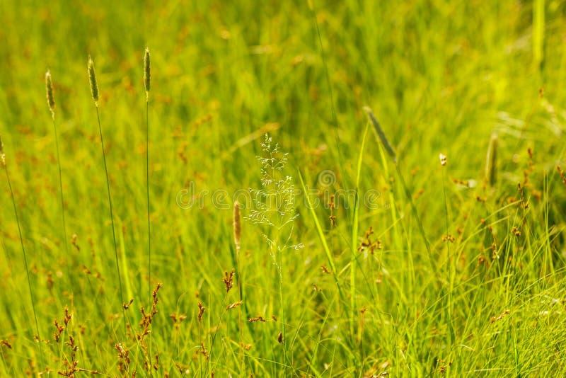 Field grass soft focus and bokeh Wallpaper.  stock image