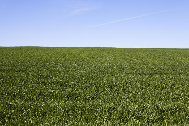 Field of grass royalty free stock image