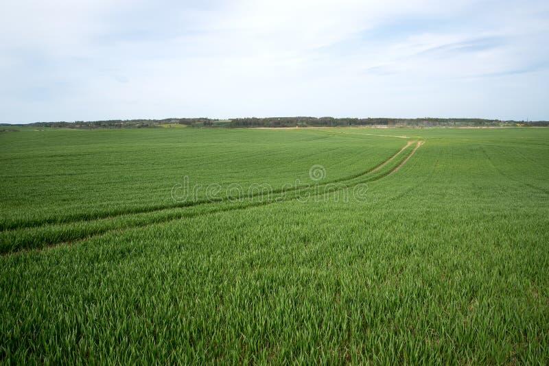 field green arkivfoto