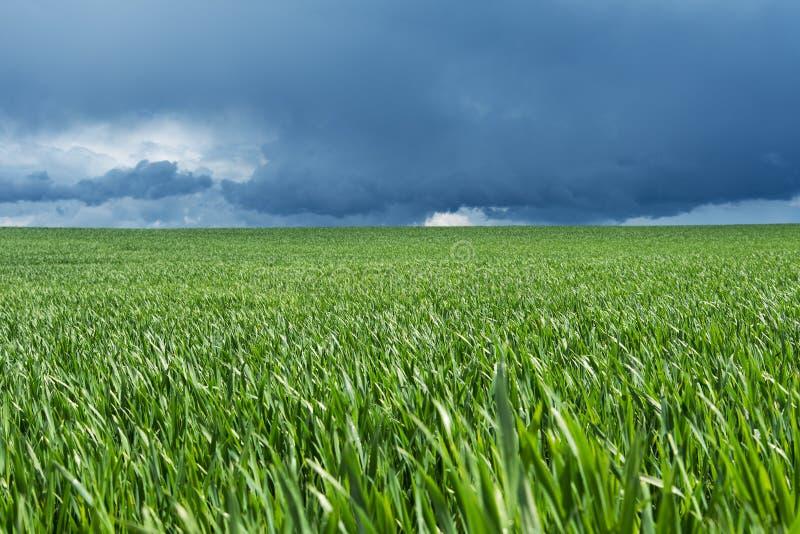 field green arkivfoton